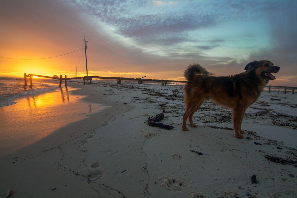Dog Island (4/6)