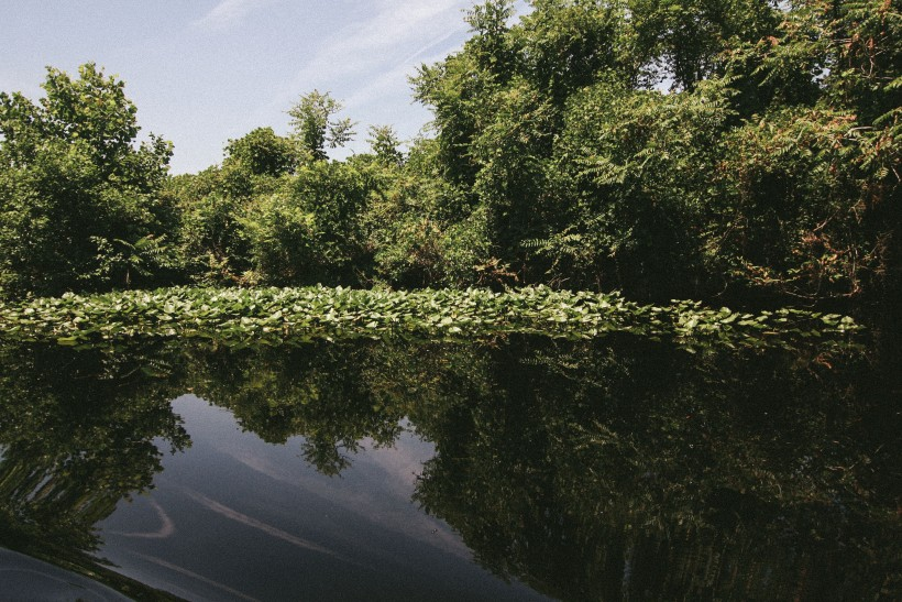 dismal swamp-12