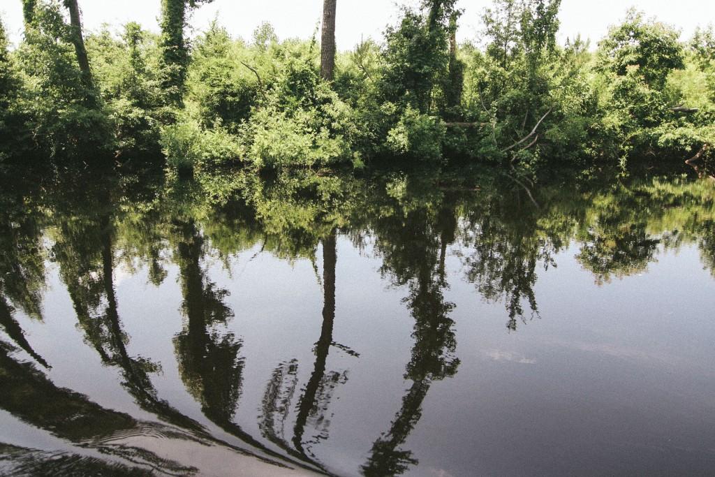 dismal swamp-16