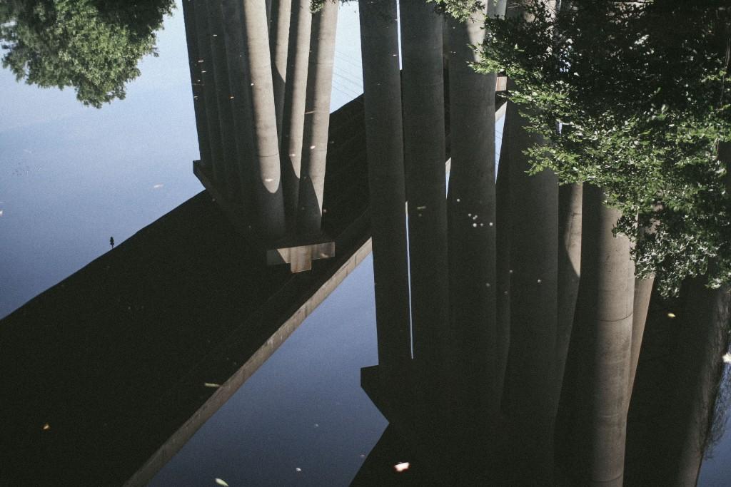 dismal swamp-4