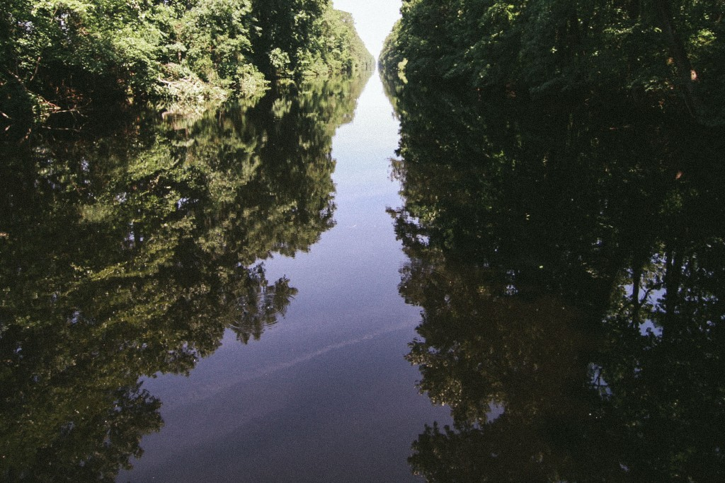 dismal swamp-9