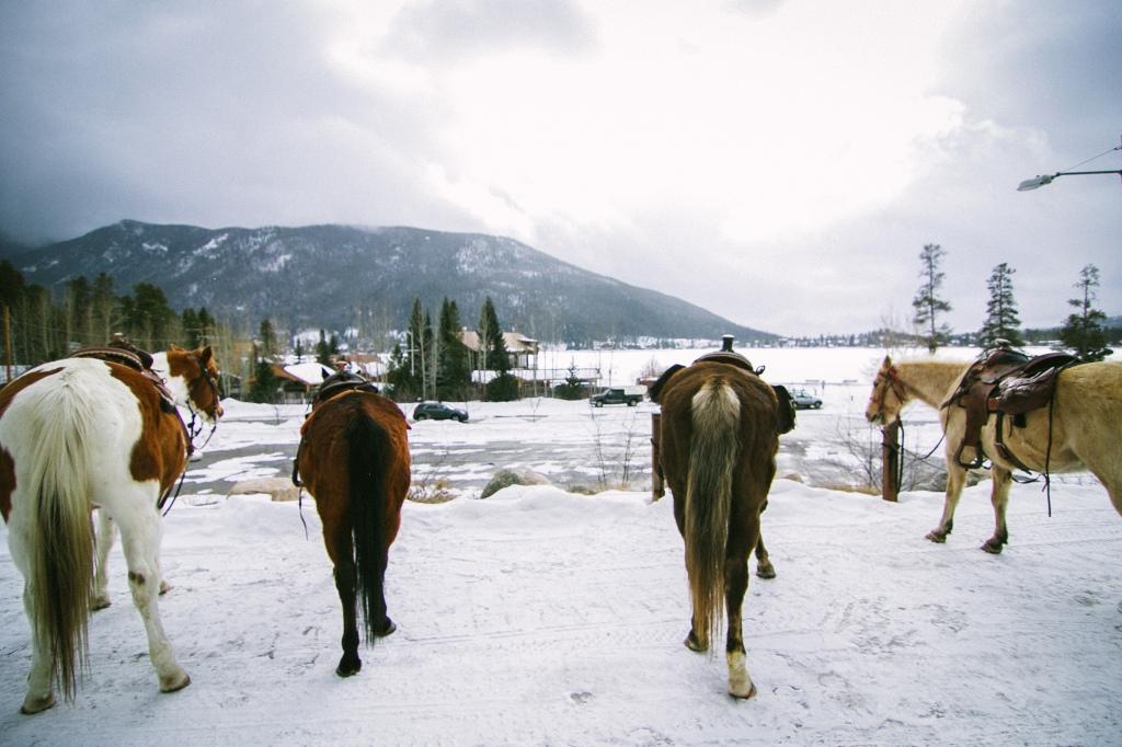 wild west 1-24